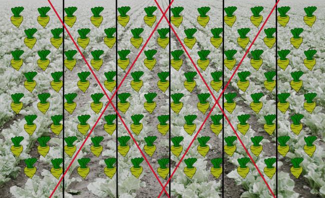 Cukrinių runkelių sėjamosios Kverneland MONOPILL